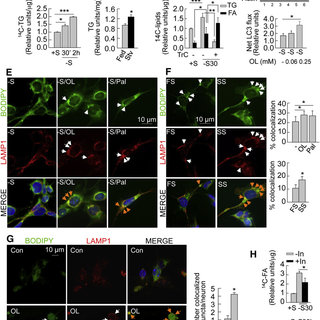 Starvation induces autophagy in the hypothalamus (A) Immunoblots for... | Download Scientific Diagram