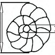 Dextral (A) and sinistral (B) coiling in a trochospirally