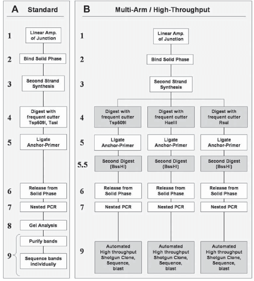 medium resolution of schematic diagram of lam pcr protocols a standard single arm protocol as described by schmidt et al 1 b three arm high throughput protocol