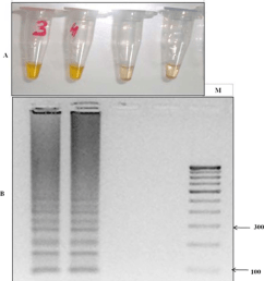 lamp detection of the k76t mutation through primer set fipm4 in cq lamp detection of the [ 850 x 978 Pixel ]