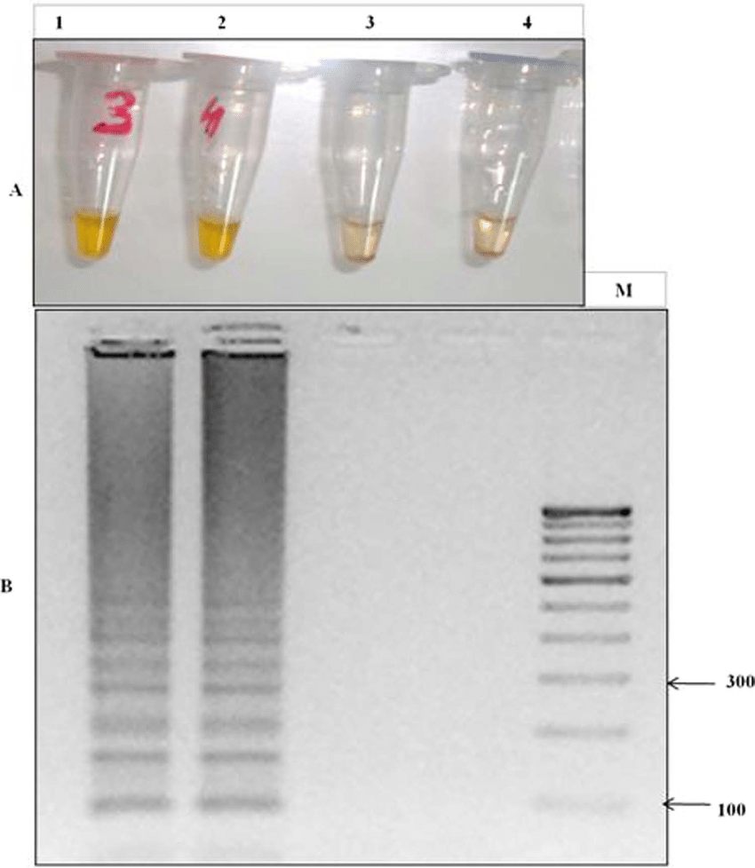 hight resolution of lamp detection of the k76t mutation through primer set fipm4 in cq lamp detection of the