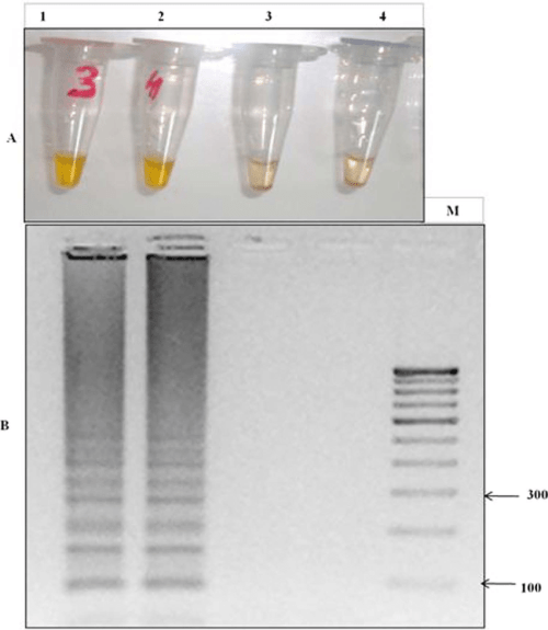 small resolution of lamp detection of the k76t mutation through primer set fipm4 in cq lamp detection of the