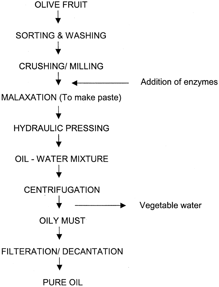 hight resolution of schematic diagram for extraction of olive oil by enzymatic treatment