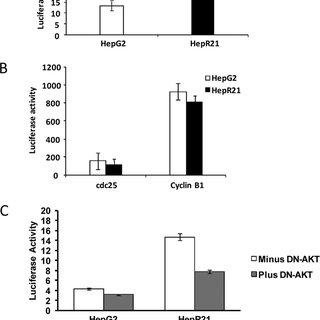 HAS2 and CD44 are required for human lung fibroblast