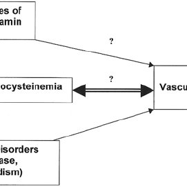Cobalamin metabolism in mammalian cells. The pathways by