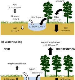 conceptual models of a carbon cycling and b water cycling in fields download scientific diagram [ 850 x 1201 Pixel ]
