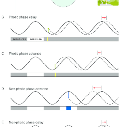 molecular basis of clock resetting by light and behaviour arousal a simple model of [ 850 x 1199 Pixel ]