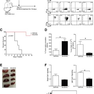 EMC cell lines resemble primary tumors from IgH.TEμ mice