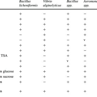 (PDF) Effect of dietary supplementation of Bacillus