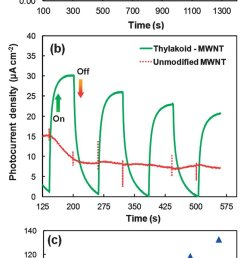 a open circuit potentials of unmodified control and thylakoid modified mwnt electrodes [ 850 x 2078 Pixel ]