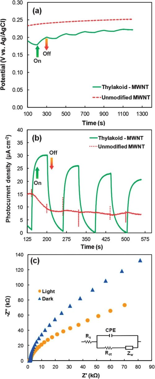 small resolution of  a open circuit potentials of unmodified control and thylakoid modified mwnt electrodes