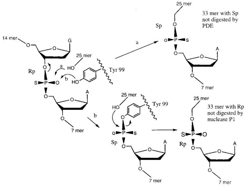 Stereochemical course of RepB-mediated DNA strand-transfer