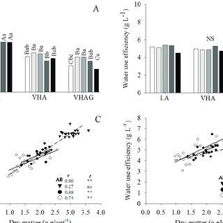 (PDF) Wheat (Triticum aestivum L.) response to boron in