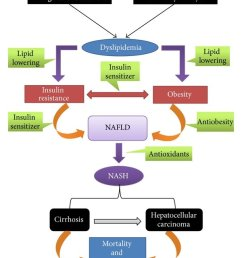 an overview of the pathogenesis of nonalcoholic fatty liver disease nafld and nonalcoholic steatohepatitis [ 850 x 1027 Pixel ]