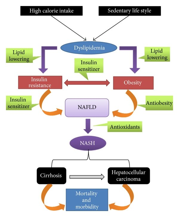hight resolution of an overview of the pathogenesis of nonalcoholic fatty liver disease nafld and nonalcoholic steatohepatitis