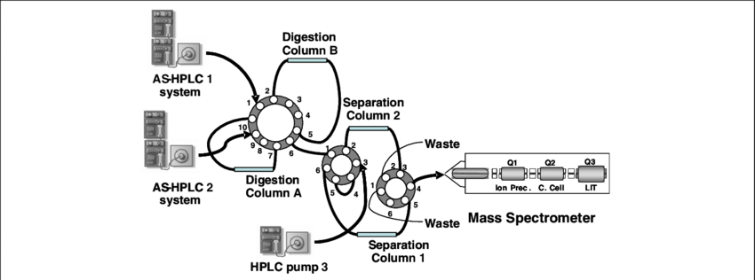 An on-line protein digestion system. comprising three HPLC