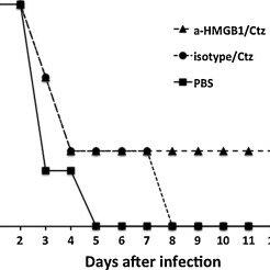 Non-lactose fermenting bacteria colonies on MacConkey agar
