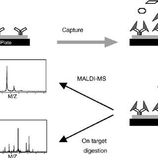 Electrospray ionization process. A fine mist of analyte is