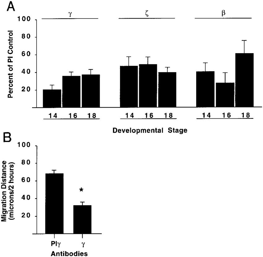 Effects of Type II TGFb receptor antibodies on