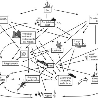 (PDF) Fire effects on aquatic ecosystems: An assessment of