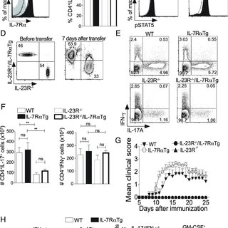 (PDF) IL-7/IL-7 Receptor Signaling Differentially Affects