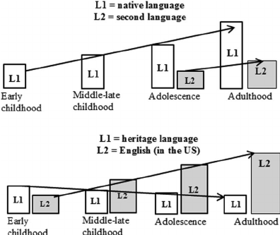 Language Acquisition of L1 and L2 in Typical Monolingual