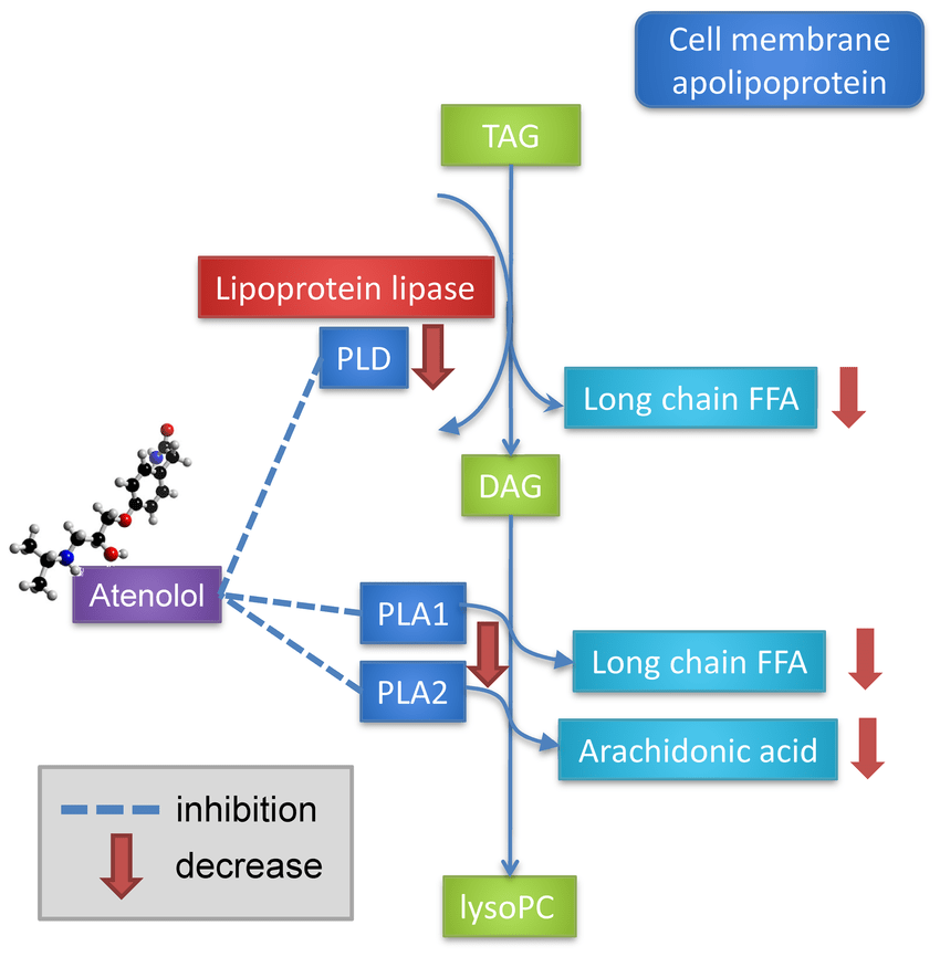 Alternative model of a potential mechanism for atenolol ...