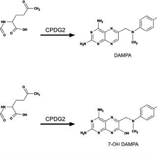 (PDF) A fast LC-MS/MS assay for methotrexate monitoring in