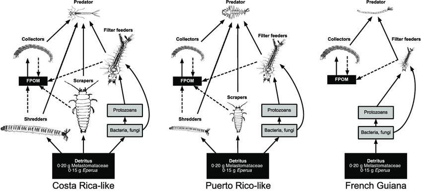 Food webs in experimental Costa Rica-like (CR), Puerto