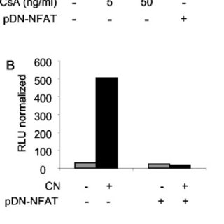 Role of NFAT transcription factors in light expression in