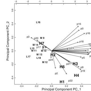 (PDF) Dynamics of amino acid metabolism of primary human