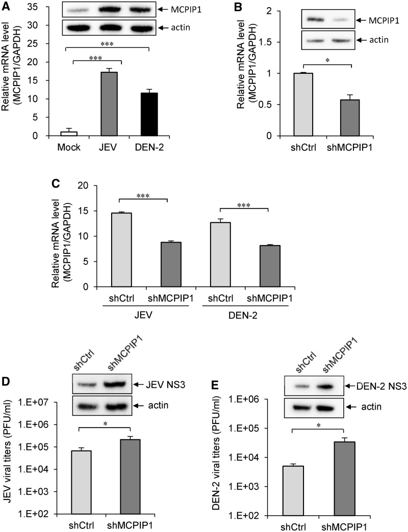 The antiviral potential of endogenous MCPIP1. (A) The
