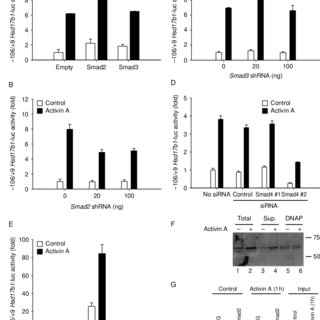 The ALK5 kinase activity is required for p38 activation