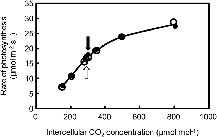 Rates of photosynthesis plotted against the intercellular