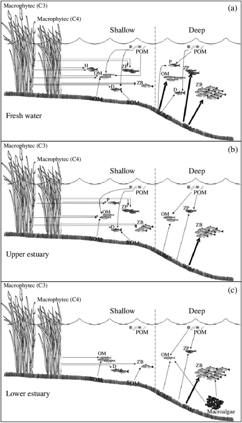 small resolution of conceptual diagrams of basal sources and fish feeding mode functional groups fmfgs trophic relationships