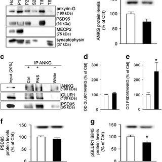 (PDF) Ankyrin-3 as a molecular marker of early-life stress