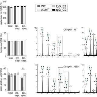 Differentiation of T cell subsets The different CD4