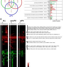 transcriptomic profiles in the spleen following b pertussis challenge download scientific diagram [ 850 x 1122 Pixel ]