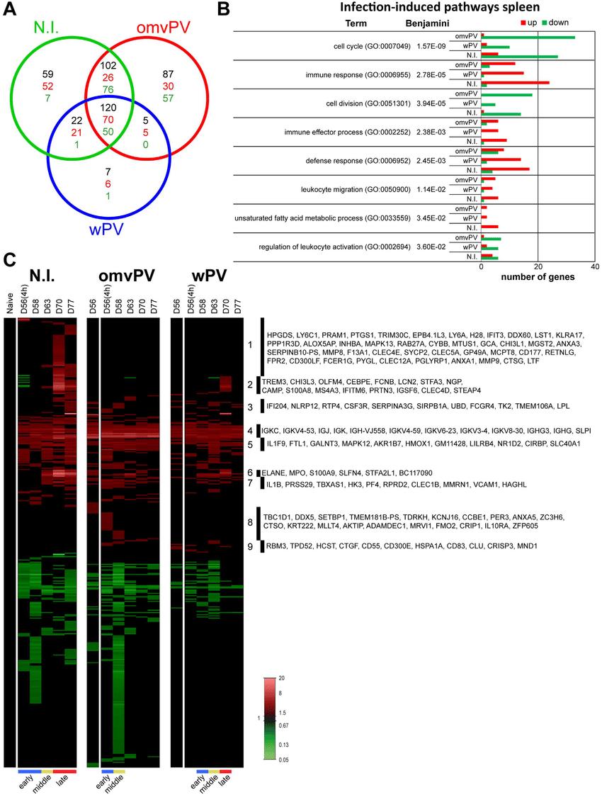 medium resolution of transcriptomic profiles in the spleen following b pertussis challenge download scientific diagram