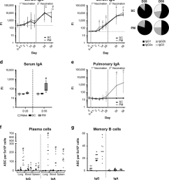 bordetella pertussis outer membrane vesicle omv specific b cell download scientific diagram [ 850 x 950 Pixel ]