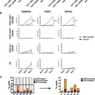 Functional validation of mRNA expression encoding for VASA