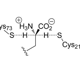 (PDF) Dimerization of Bacterial Diaminopimelate Epimerase