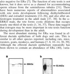 antibody competition for lh2 a and b and s40 c and d in dogs and download scientific diagram [ 756 x 1345 Pixel ]
