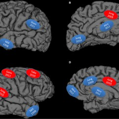 Lower Brain Diagram Lt155 Wiring Graphical Display Of Studies Reviewed Blue Integrity Download Scientific