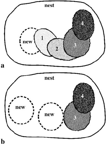 Schematic diagram showing the typical pattern of egg
