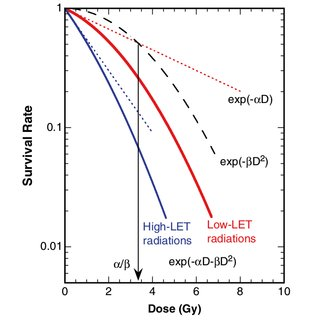 Direct and indirect actions of radiation. The structure of