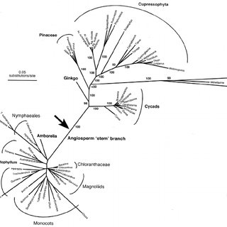 7 Line drawings comparing the male and female reproductive
