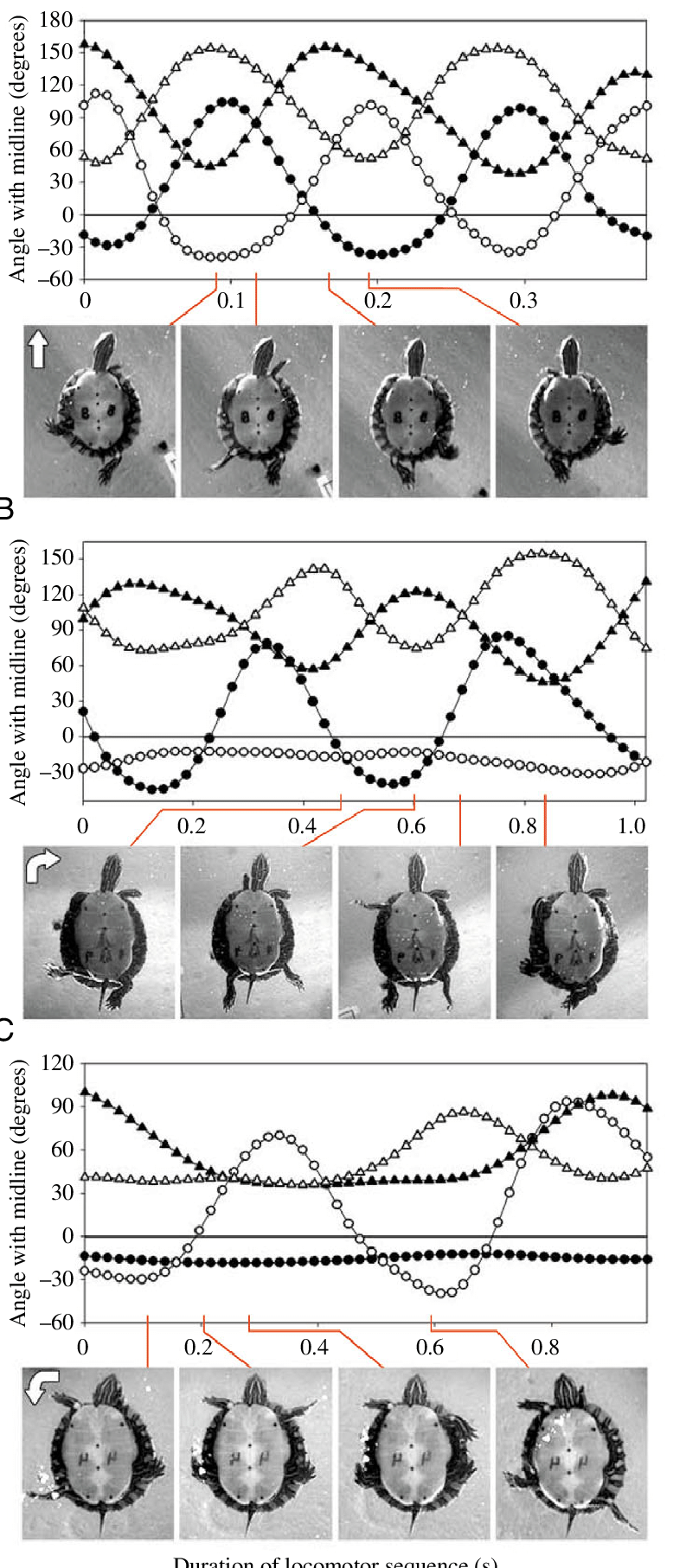medium resolution of representative kinematic profiles for three modes of swimming performed by painted turtles with still images