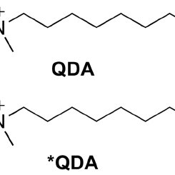 De novo synthesis of fatty acids from carbohydrate