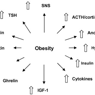 (PDF) Obesity: Prevalence, Theories, Medical Consequences